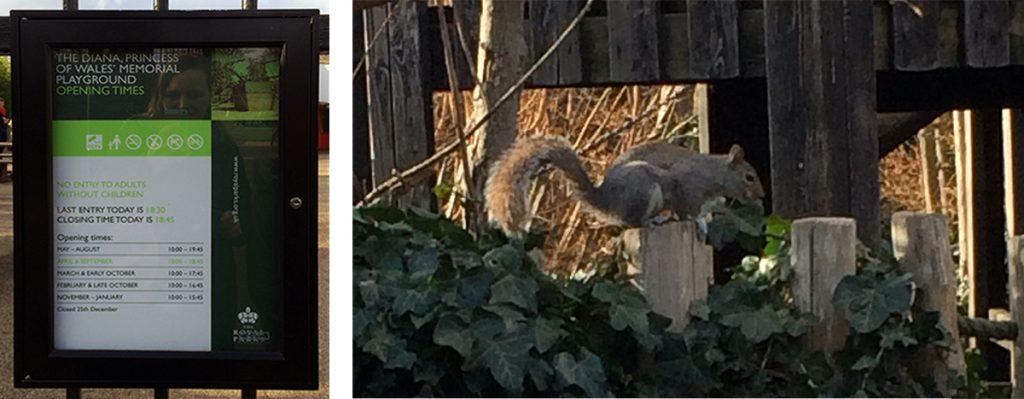 Eichhörnchen laufen einem in so ziemlich jedem Londoner Park über den Weg, so auch hier im Diana Memorial Playground in den Kensington Gardens.