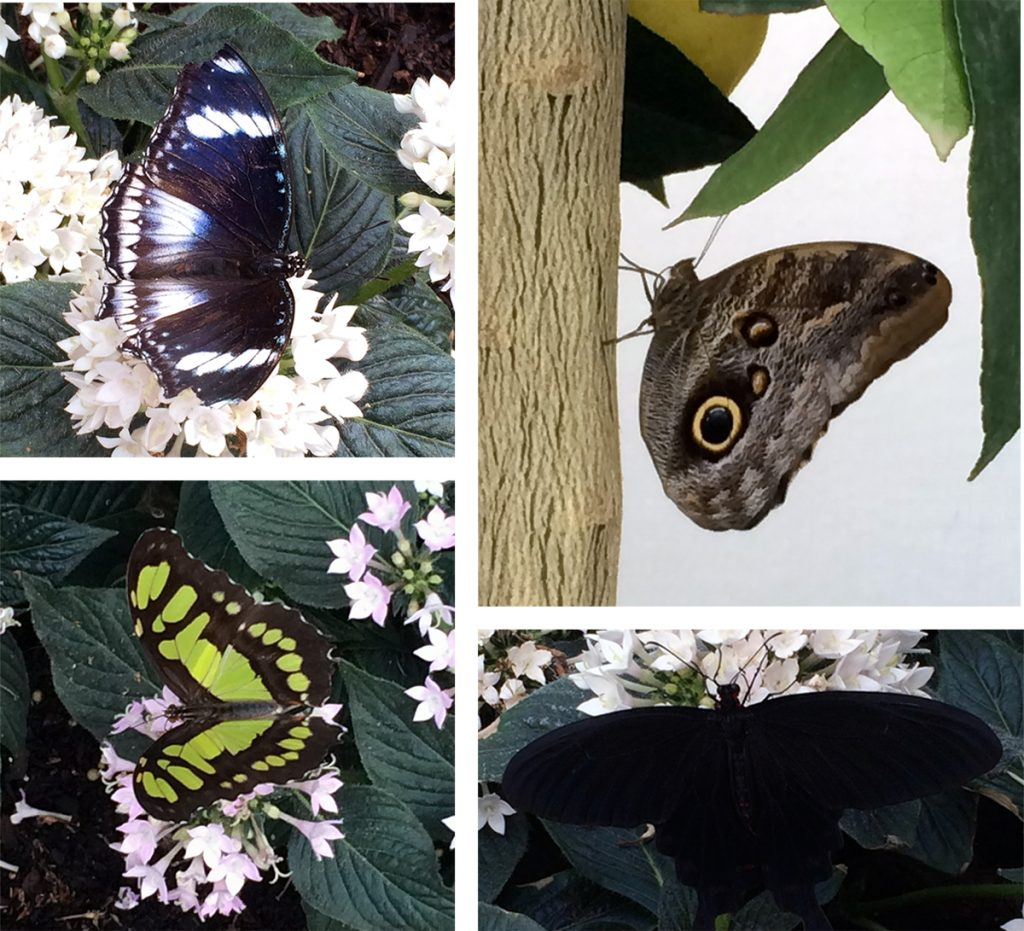 Schmetterlinge, Schmetterlinge, Schmetterlinge - allüberall.