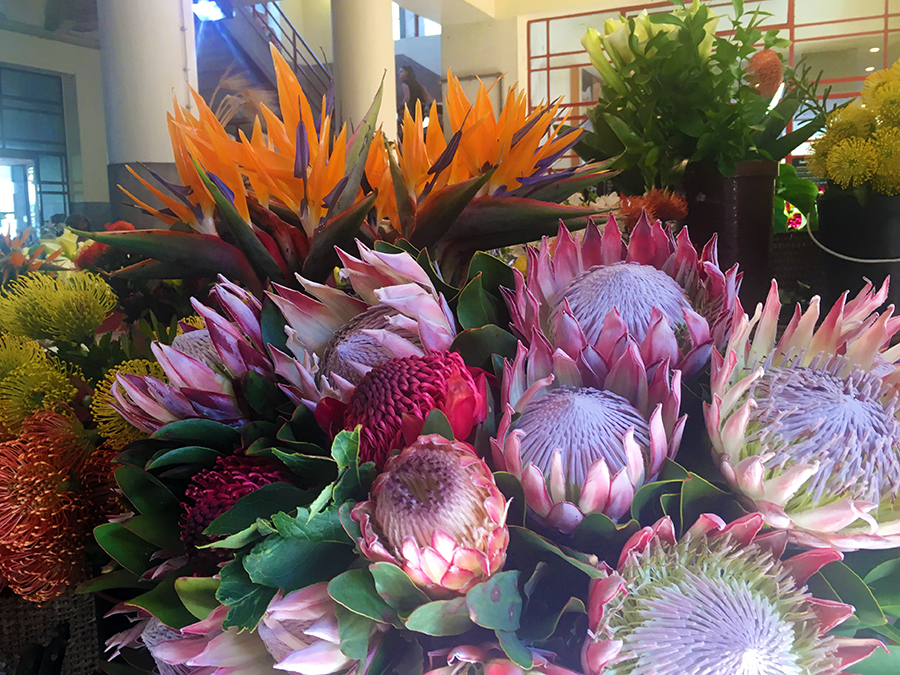 ... bis hin zu einer wahren Flut an Blumen und Blüten - ein wahres Paradies!