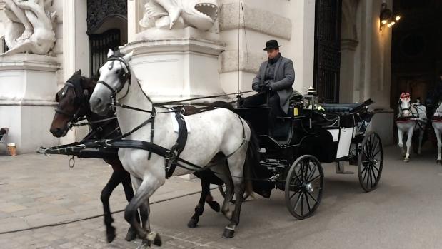 Die Fiaker, Wiens berühmte Pferdekutschen. Dieser hier fährt allerdings um die Hofburg, bis zum Friedhof kommen wir leider nicht.