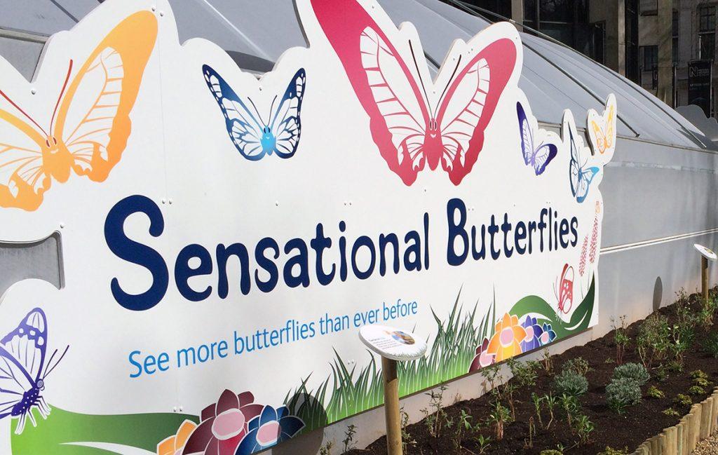 Auf in die aktuelle und beliebte Sonder-Ausstellung des Natural History Museums: Sensational Butterflies!
