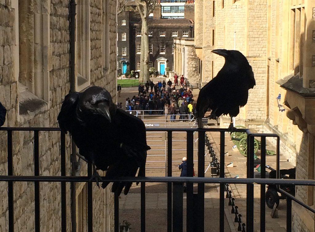 Zwei der Tower-Raben, die die Monarchie bewahren.