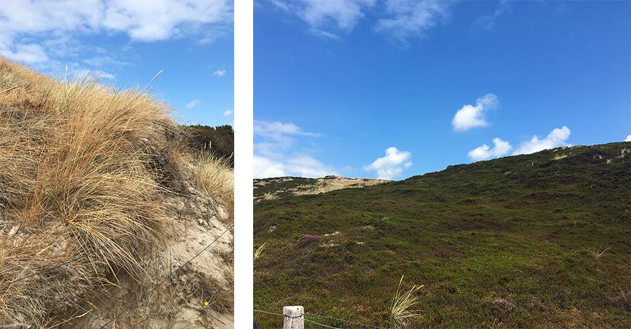 Typischer Strandhafer und bewachsene Dünen.