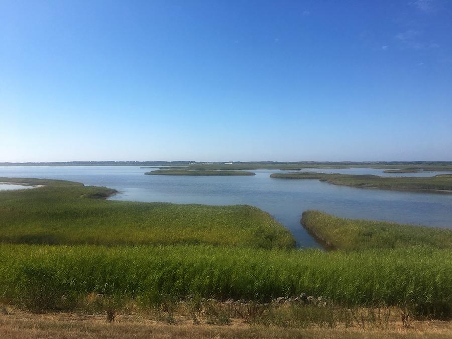 Ein Blick auf das Vogelschutzgebiet am Rantumer Deich.