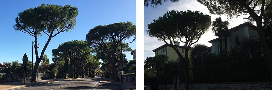 Die Gegend sieht hier ganz anders aus als Zuhause: Eine italienische Villa neben der anderen, und die Straßen gesäumt von Kiefern.
