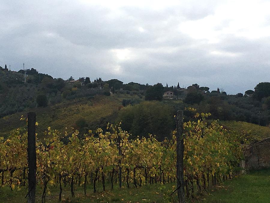 Weinreben vor den Hügeln der Toskana.