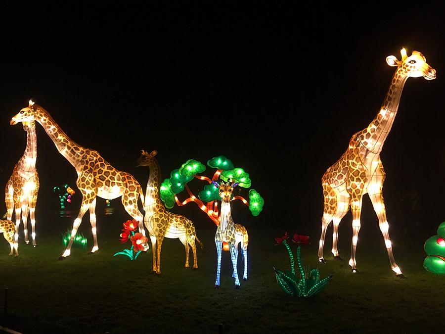 ... über eine ganze Familie an Giraffen...
