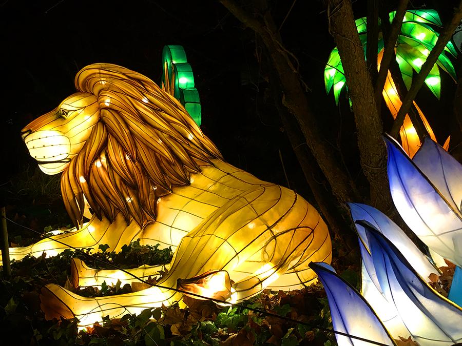 Der König der Tiere darf nicht fehlen: Der Löwe.