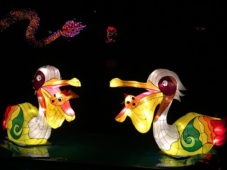 Von Pelikanen inklusive Fischen im Maul...