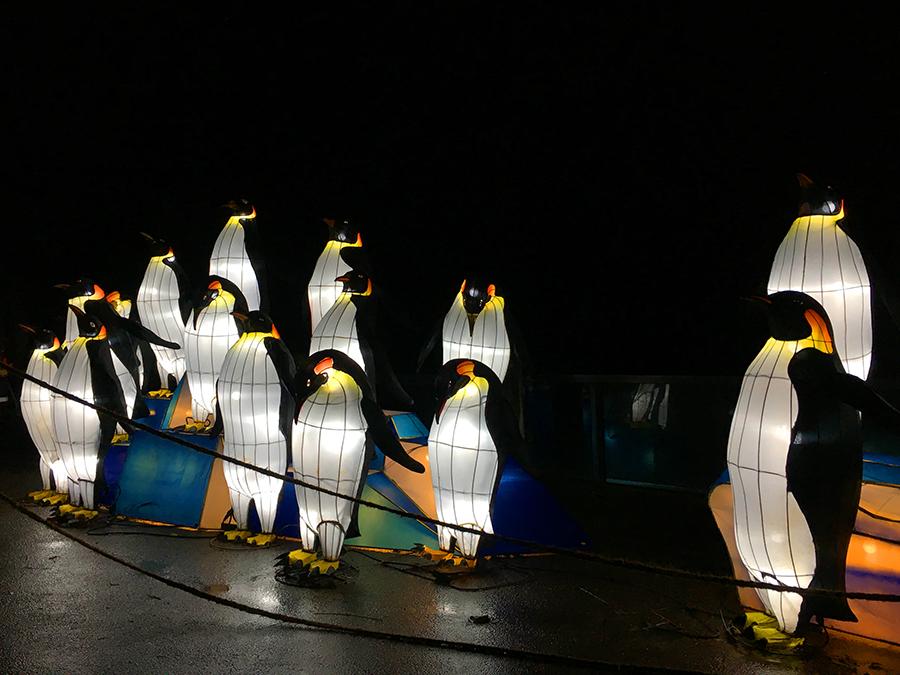... und jede Menge Pinguine.
