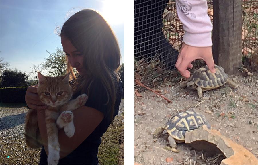 Hier werden Katzen geknuddelt, und Schildkröten auch.