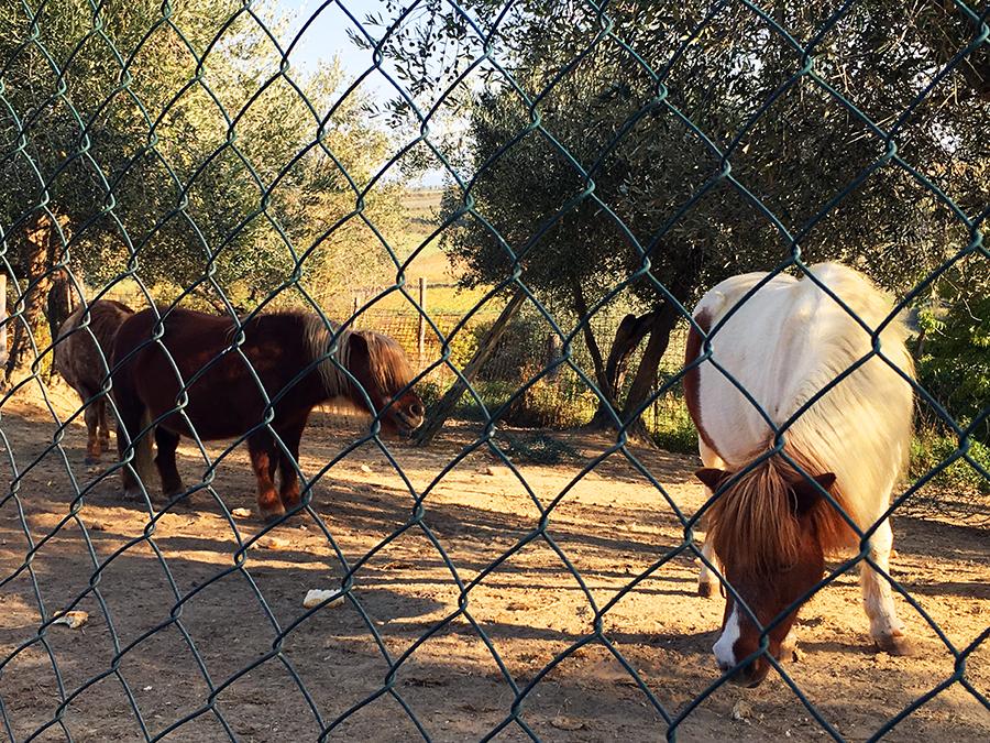 Die süßen, kleinen Ponys müssen gefüttert werden...