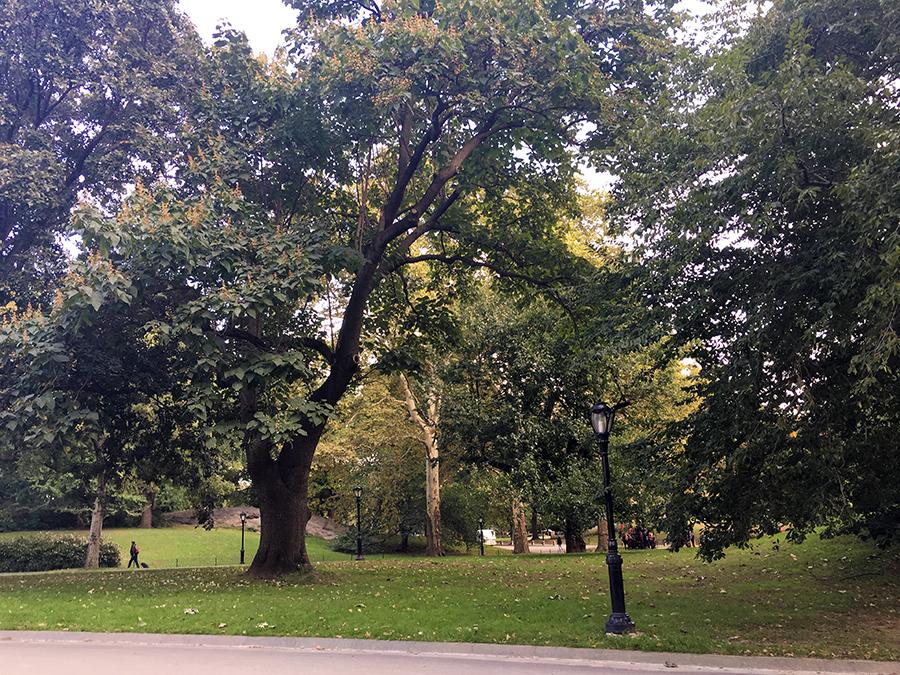 Idyllisch: viel Ruhe und viel Platz im Central Park.