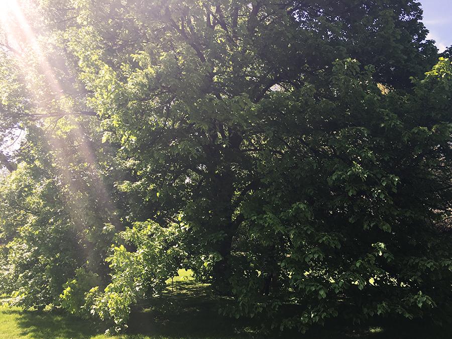 Was für ein Baum! Ein krönender Abschluss auf unserem Weg zurück zum Parkplatz.