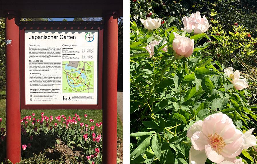 Bereits am Eingangsschild des 'Japanischen Gartens': farbige Blumenpracht, wohin man sieht.