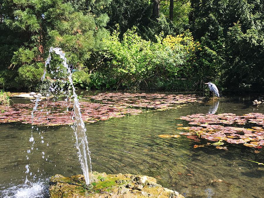 Eine Wasserfontäne, unzählige Seerosenblätter und nicht zuletzt ein erhabener Fischreiher - wow!