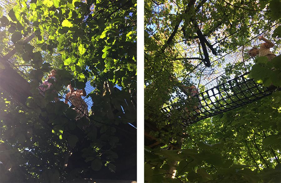 Durch das Blätterdach des Vondelparks spazieren - was gibt's Schöneres?