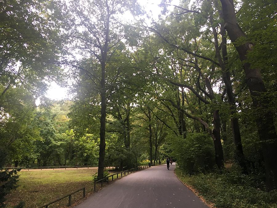 Viele Wege führen vorbei an Bäumen und Wiesen durch Berlins größten Park.