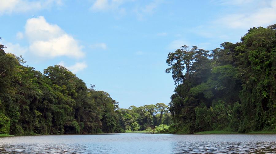 Unterwegs auf einem schier endlosen Fluss, umgeben von dichtem Dschungel, in Costa Rica.