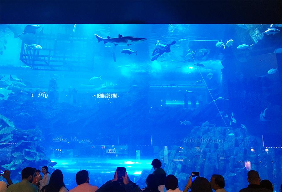 ...sondern noch etliche andere Dinge erleben und bestaunen, wie z.B. das größte Indoor-Aquarium der Welt.