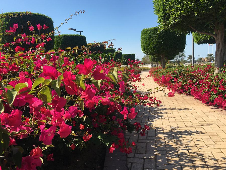 Sämtliche Beete und Rabatten sind mit Bewässerungsschläuchen versehen, ohne die hier in dieser Wüstenstadt nichts grünen und blühen würde.