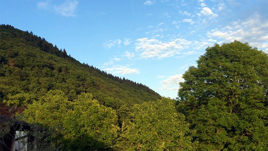 Schon schön hier, oder? Ein Blick auf die schier unendlichen Wälder und Bäume in dieser Gegend.