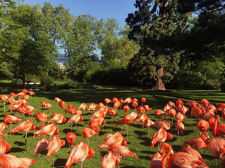 Als nächstes kommen die Flamingos...