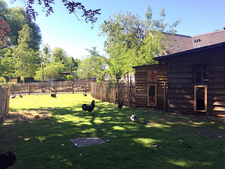 Hühner, Enten und Kaninchen teilen sich eine Wiese.