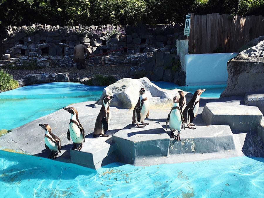Das Pinguinbecken wird gekühlt, damit den Bewohnern der Antarktis nicht zu warm wird.