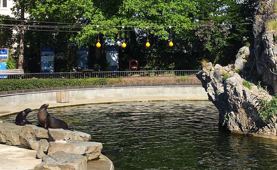 Das Seelöwenbecken des Kölner Zoos.