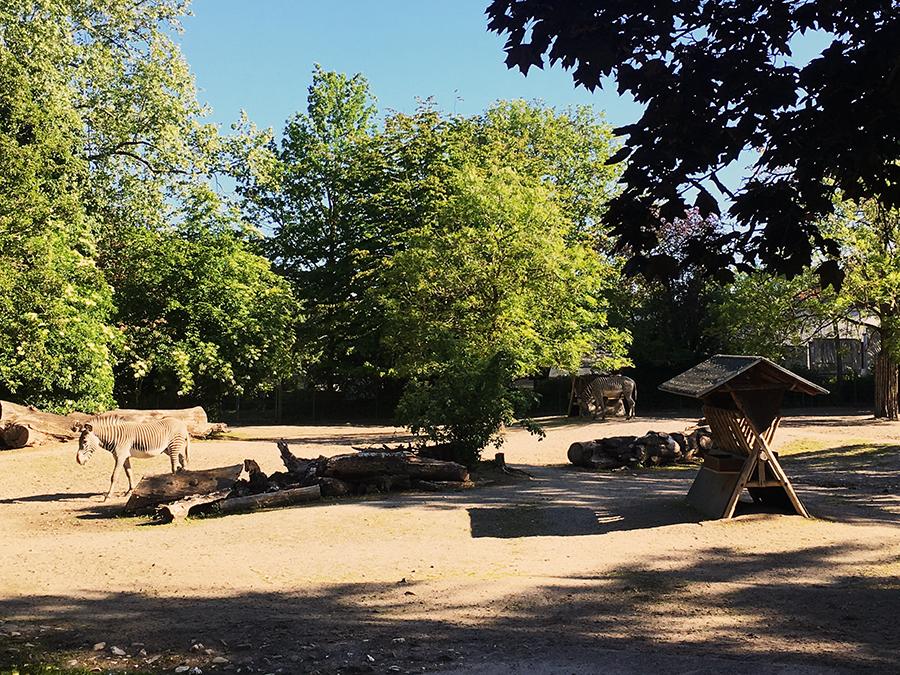 Auch immer einen Besuch wert: Die Zebras.