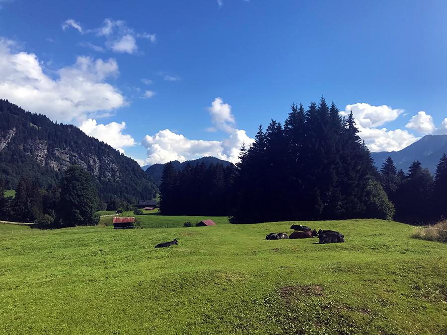 Ein paar Kühe haben wir natürlich für euch auch hierhergestellt...