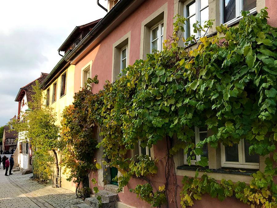 Wunderschöne Weinreben ranken sich an diesen kleinen Häuschen entlang.
