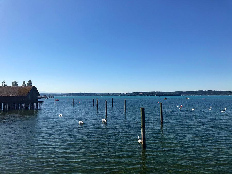 Wir lassen unsere Blicke noch einmal über den Bodensee schweifen, zählen Schwäne...