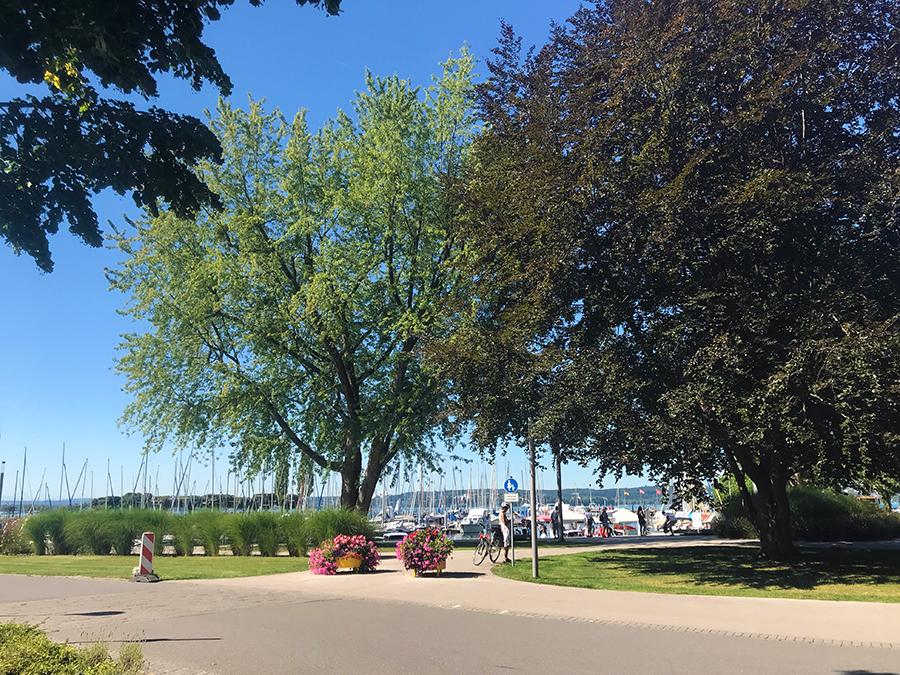 Vom Parkplatz aus einfach immer Richtung Bodensee halten...