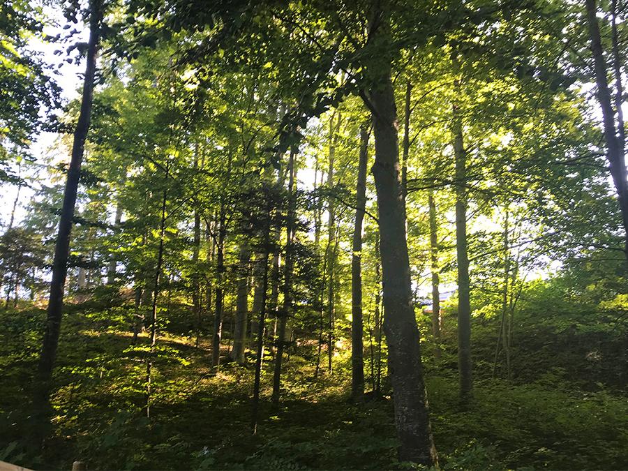Angenehm schattig ist der Weg durch den Wald den Berg hinauf zum Schloss - so kann man die Sommersonne gut aushalten!