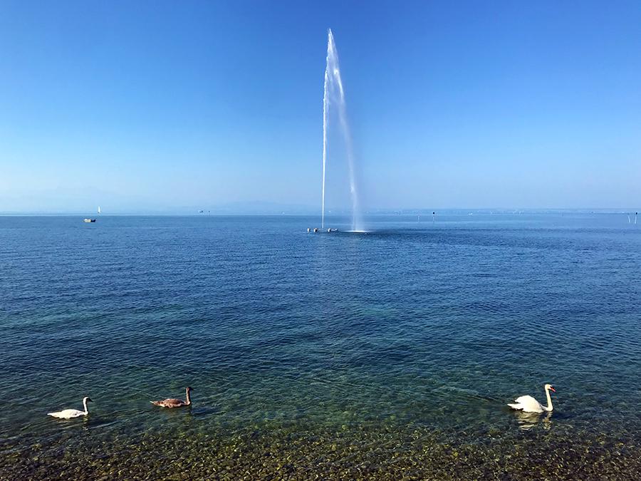 Mit Wasserfontäne und vorbeiziehenden Schwänen ist die Postkartenidylle hier am Ufer des Bodensees perfekt.