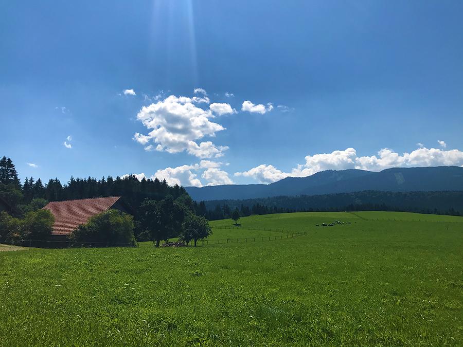Und dann noch dieser Ausblick zum Abschluss über die Wiesen von Steingaden...