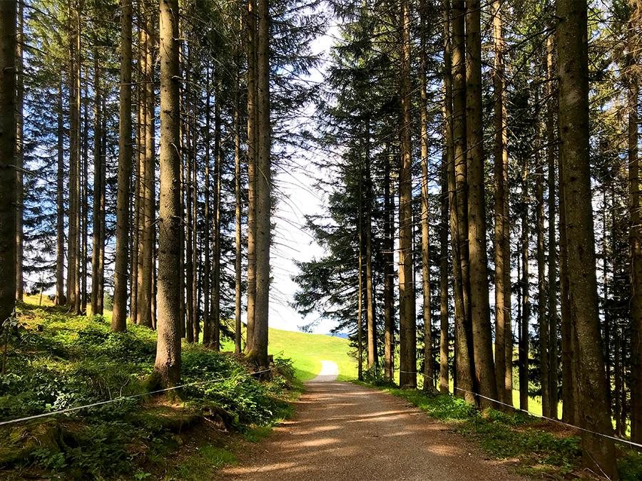 Ein Stück des Weges führt durch ein schattiges Wäldchen, aber am Ende wartet wieder die Sonne auf uns.