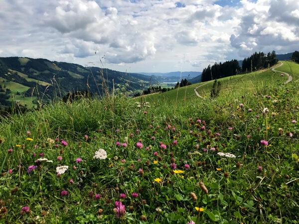 Was für ein Ausblick über die Allgäuer Alpen!
